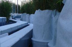 Die frostgeschützten Pflanzen